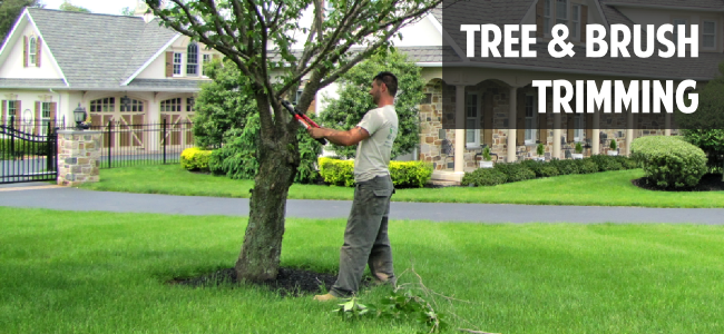 Green Leaf Landscaping ... - Tree Service And Tree Trimming By Green Leaf Landscaping